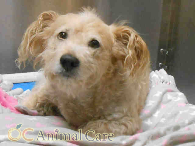 County of Orange OC Animal Care (With images) Animals