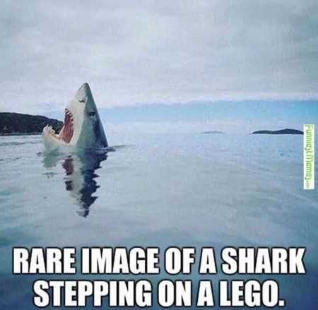40 Absolutely Hilarious Animal Pictures - Hilarious Animals