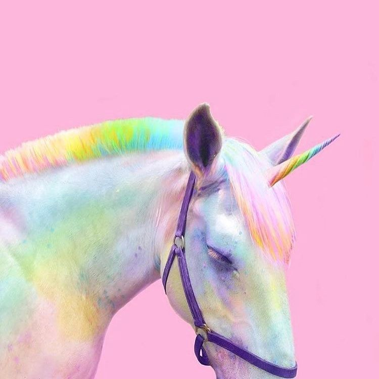 """4,262 Likes, 42 Comments - Spectrum Collections ® (@spectrumcollections) on Instagram: """"Ok so the #pink cat was about as photoshopped as this #unicorn but incase it offended this ones…"""""""
