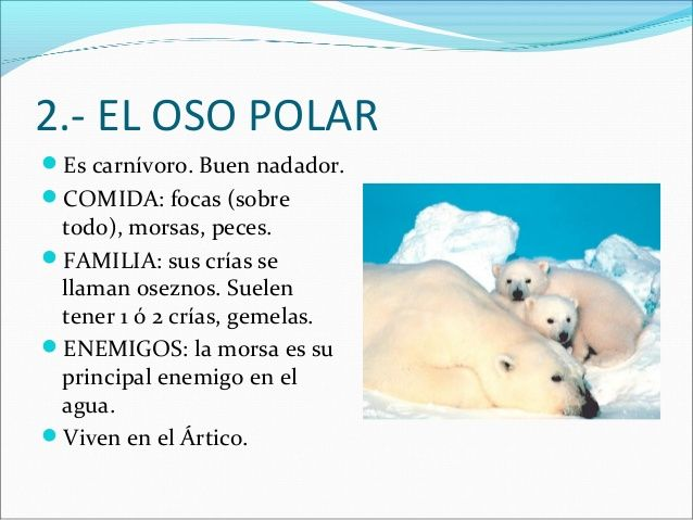 El Polo Caracteristicas Y Animales Animal Classification Dual Language Classroom Spanish Resources