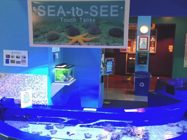 Touch a horseshoe crab or feed a stingray at our Sea-to-See Touch Tanks!  With demonstrations every hour and feedings twice daily, you're sure to have fun in this underwater exploration. Tanks feature a variety of aquatic life including sea urchins, sea stars, flounder, snails, stingrays, puffer fish, and horseshoe crabs!