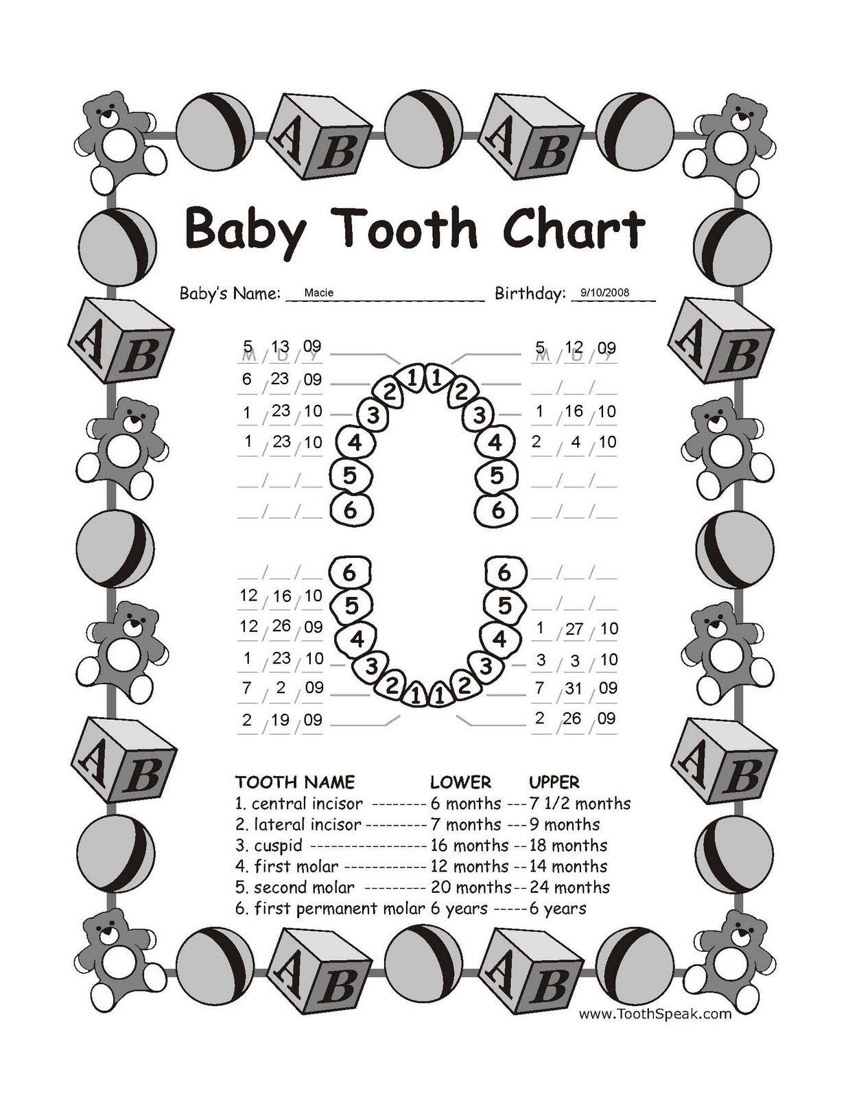 Herman Nation Tooth     Fogtndr    Teeth