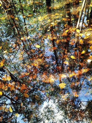 Reflejos de un Mangle en el Bosque Estatal de Piñones