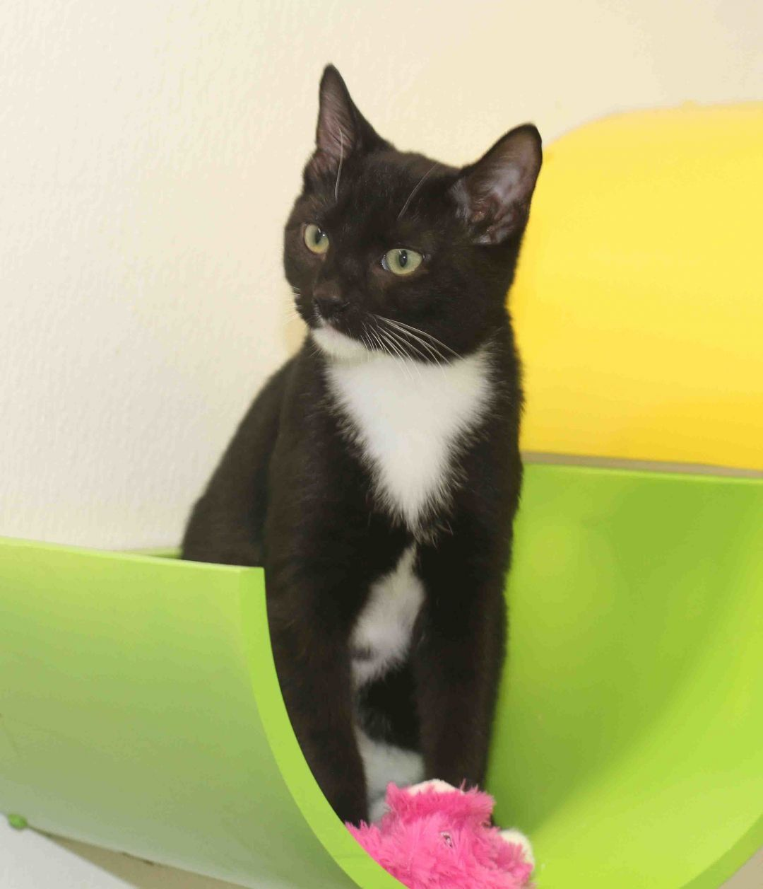Adopt Ebit on Help homeless pets, Cat adoption, Cat rescue