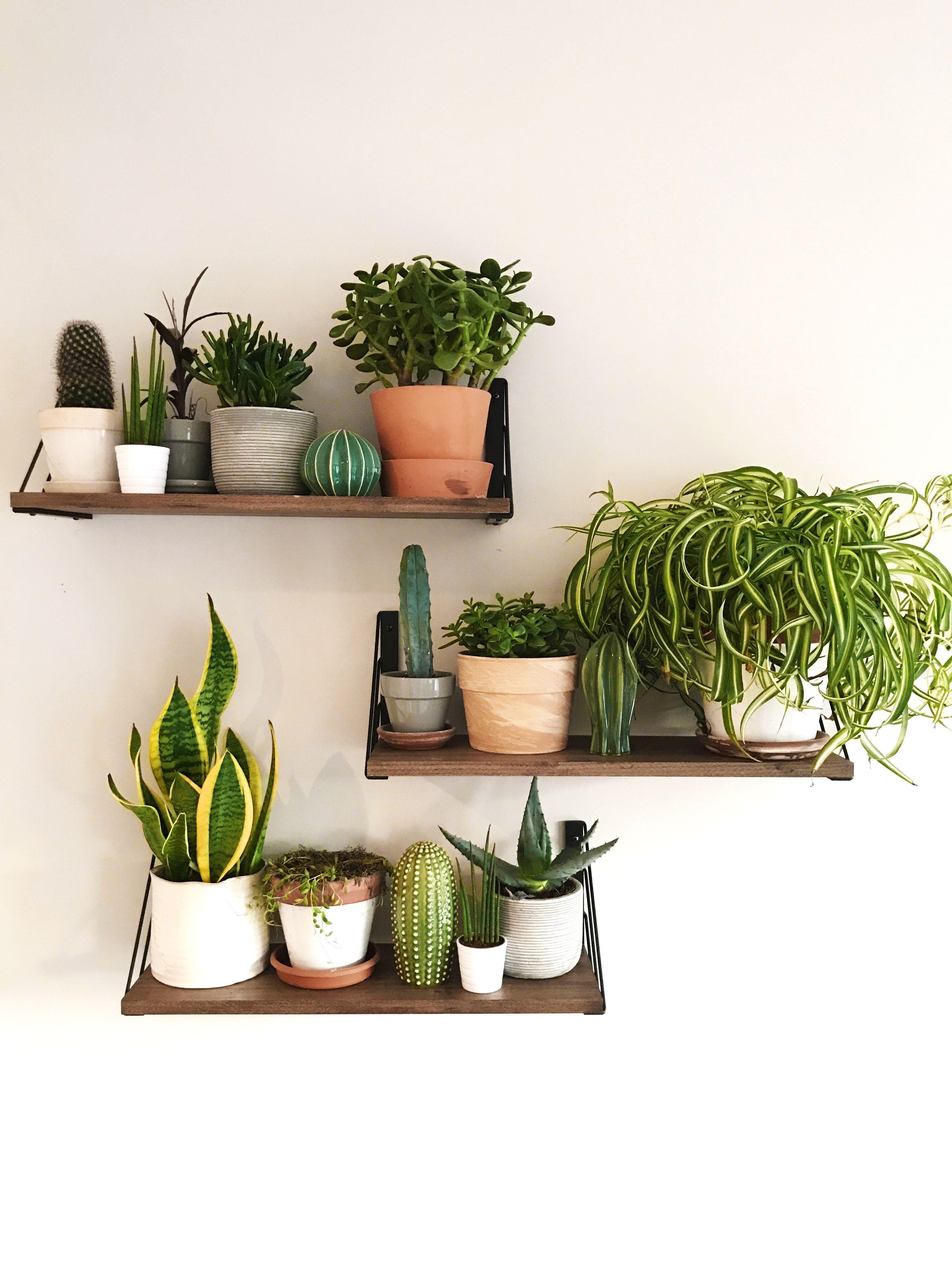 Cactus Cacti Plant Succulent Aesthetic Greenery Room Inspo Inspiration Roominspo Greenthumb Plant Decor Indoor Plant Decor House Plants Decor