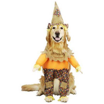Scarecrow Dog Costume Pet Costumes Dog Halloween Dog Costume