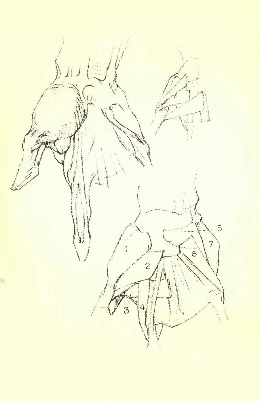 Constructive Anatomy by George Bridgman | Scribd | George Bridgman ...
