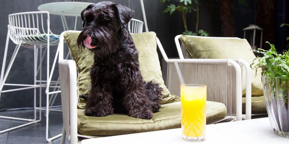 2019 The Top 10 Best Pet Friendly Hotels In London Pet Friendly Hotels Dog Friends Dog Friendly Hotels