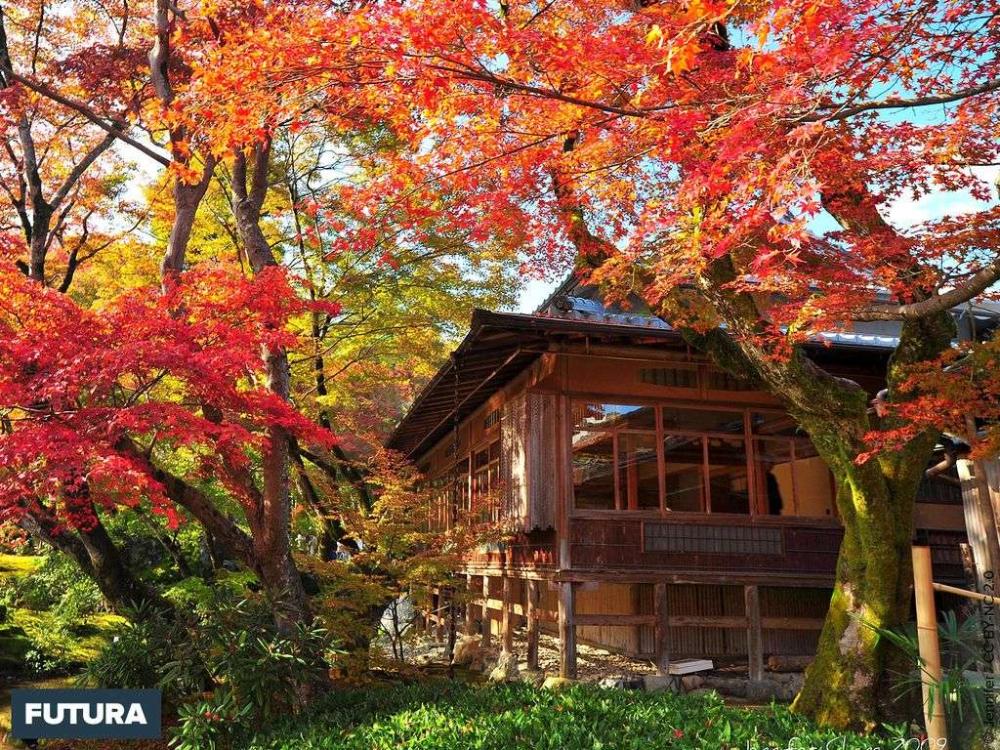 Couleurs D Automne Au Japon Couleur Automne Fond D Ecran Couleur Fond Ecran Hiver