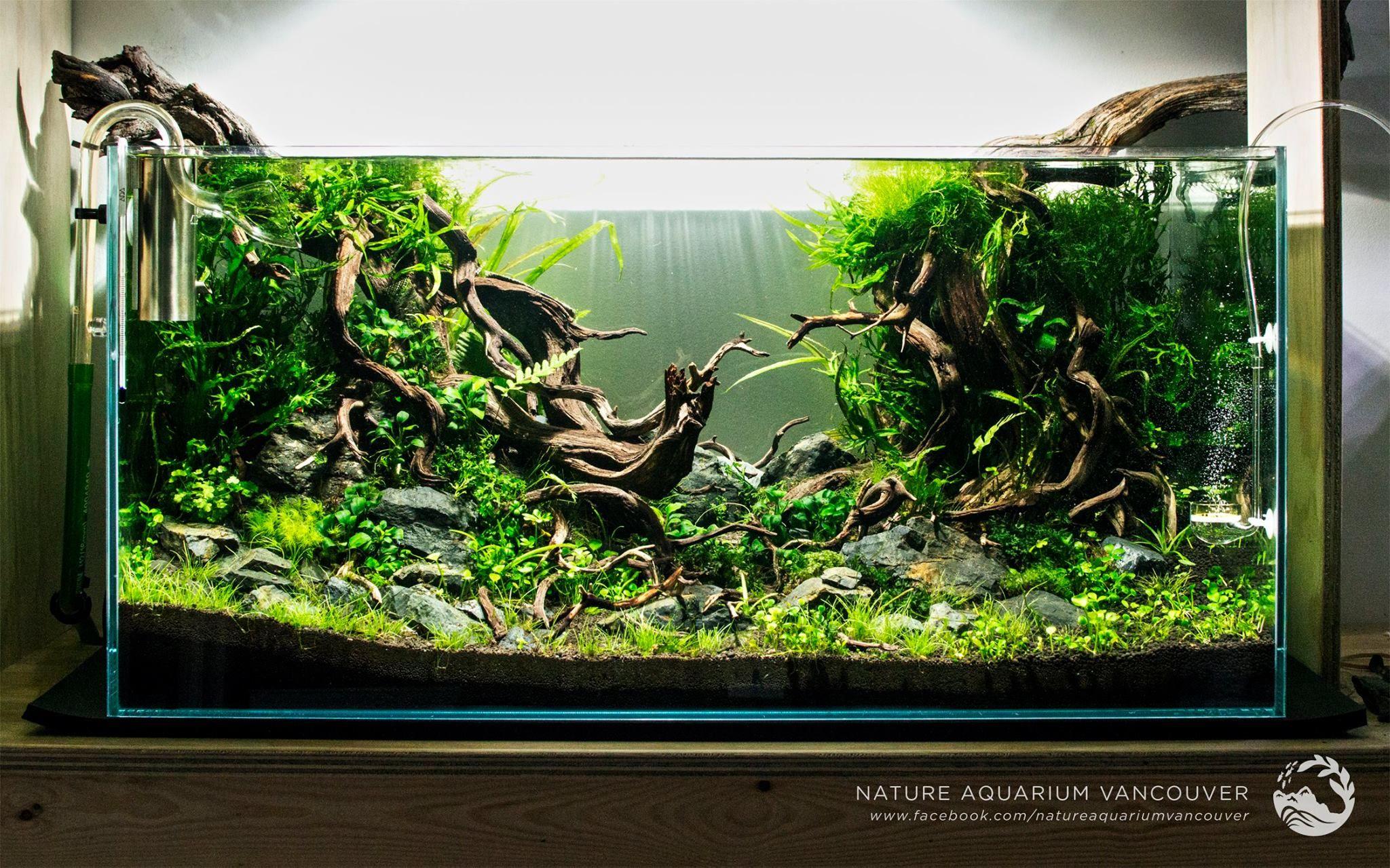 Freshwater aquarium fish vancouver - Nature Aquarium Vancouver