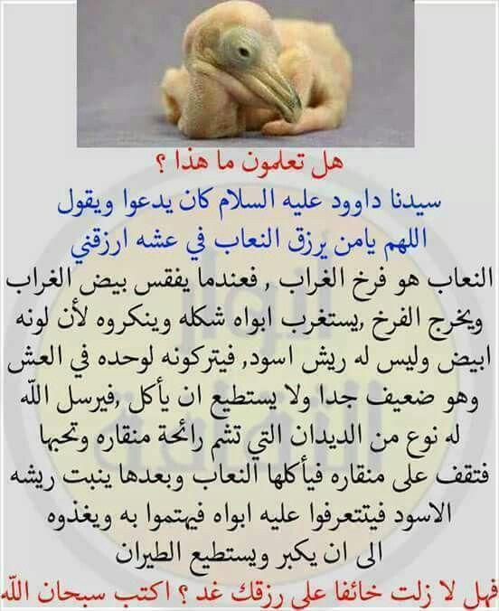 سبحان الله وبحمده سبحان الله العظيم Book Qoutes Islamic Quotes Learn Islam