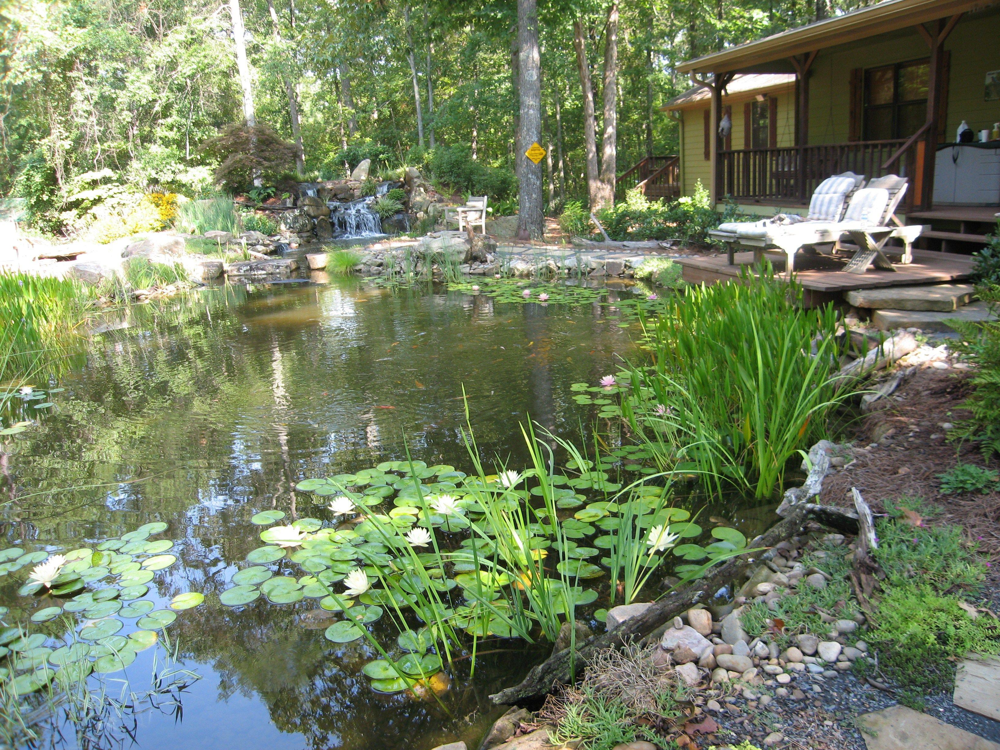 Water Garden Garden Pond Koi Pond Vườn Đẹp 640 x 480