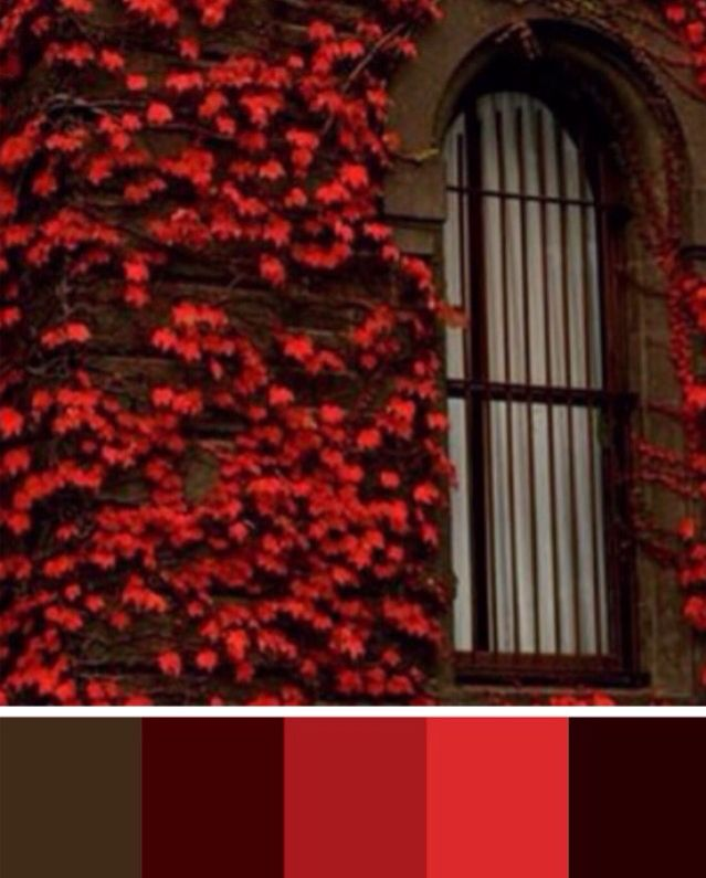 Red window color palette