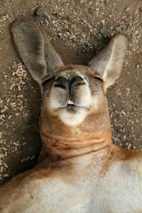 Lazing...