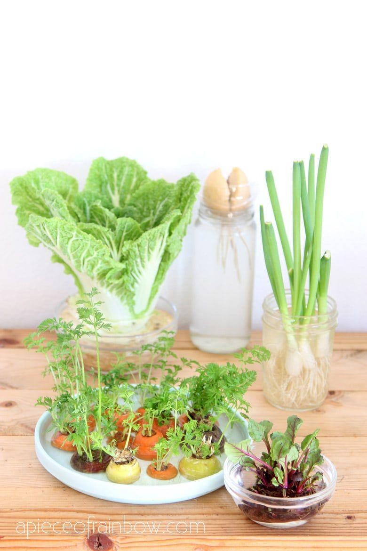 12 Best Veggies Herbs To Regrow From Kitchen Scraps In 2020 Regrow Vegetables Vegetable Garden Diy Food Garden