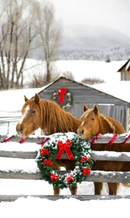 Frohe Weihnachten Pferd.Pferd Weihnachten Pferde Pferde Pferde Winter Weihnachten
