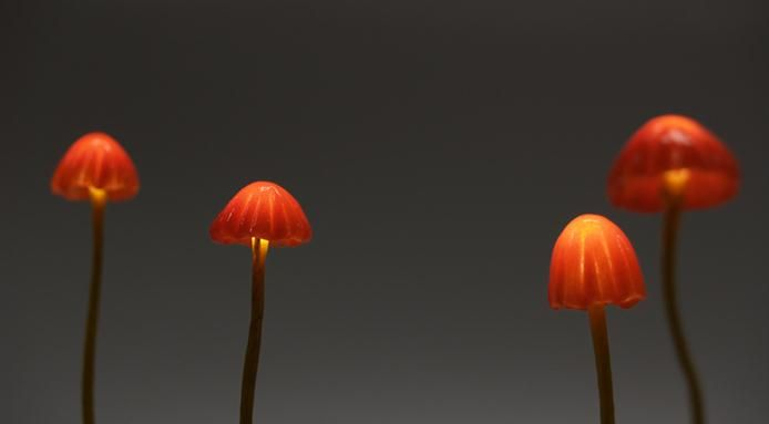 Amazing Mushroom Shaped Lamps