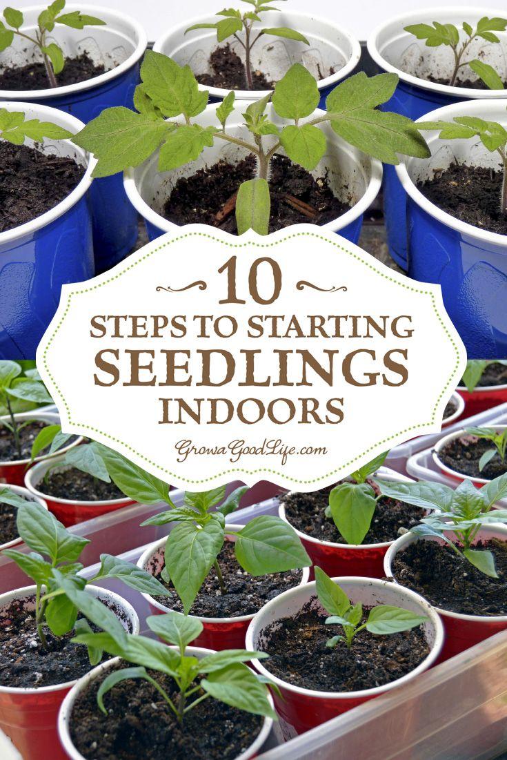 25 Trending Starting Seeds Indoors Ideas On Pinterest 400 x 300