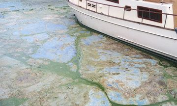 Toxic Algal Blooms Aren't Just Florida's Problem. And They're On The Rise.