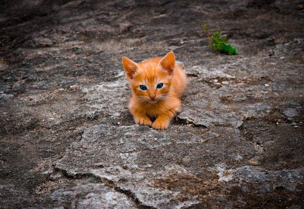 Online Store Cute Animal Videos Kittens Cat Merchandise
