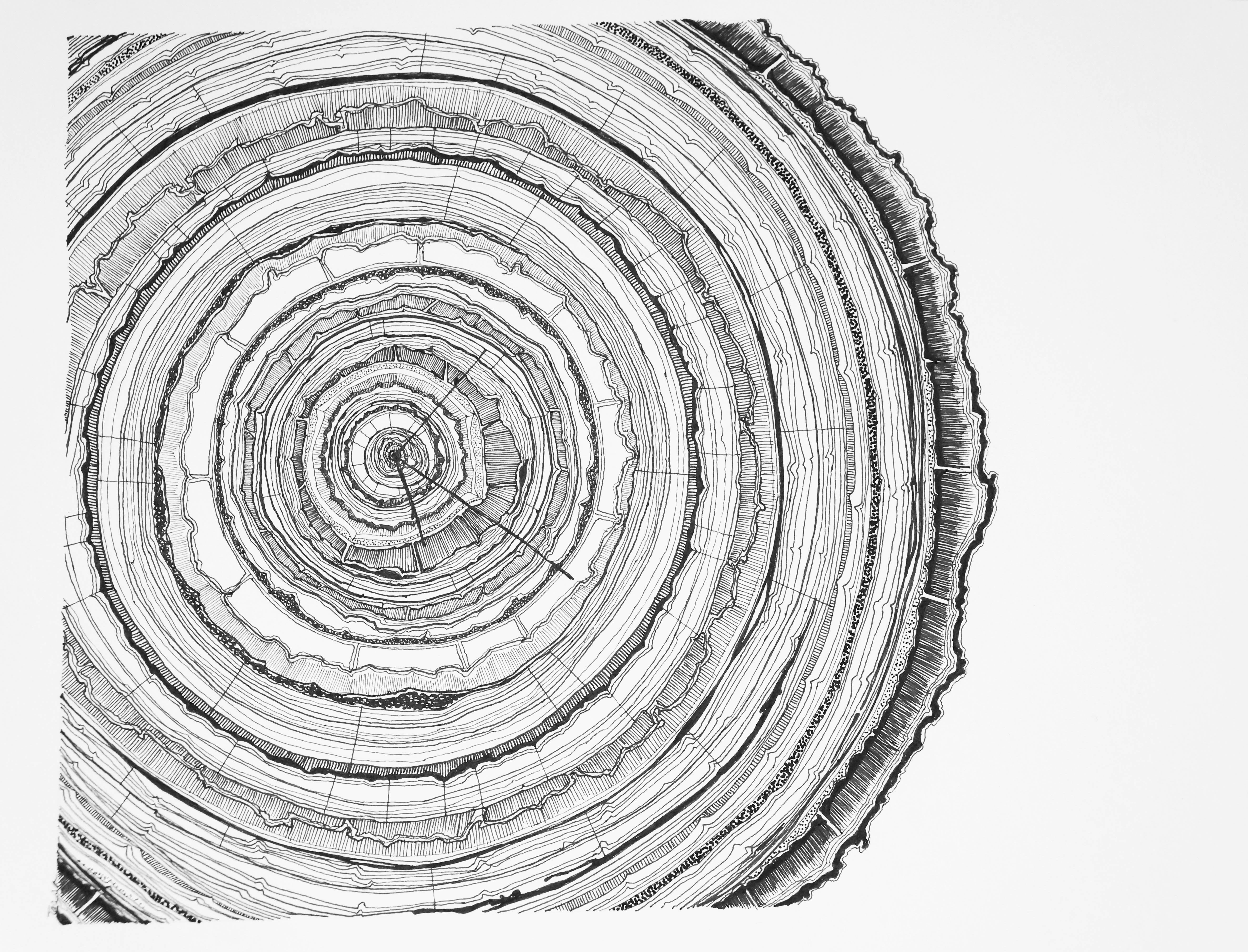 pin by becky lee on sonder tree rings rings draw