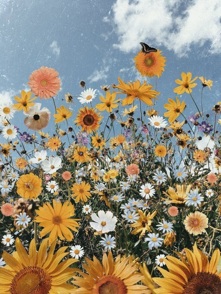 Fall aesthetic desktop · 21 wallpapers. Flowers in the wild   Yellow aesthetic pastel, Yellow ...