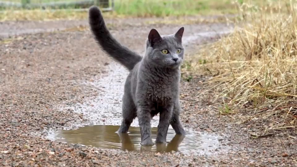 Photo of Gato jugando en un charco