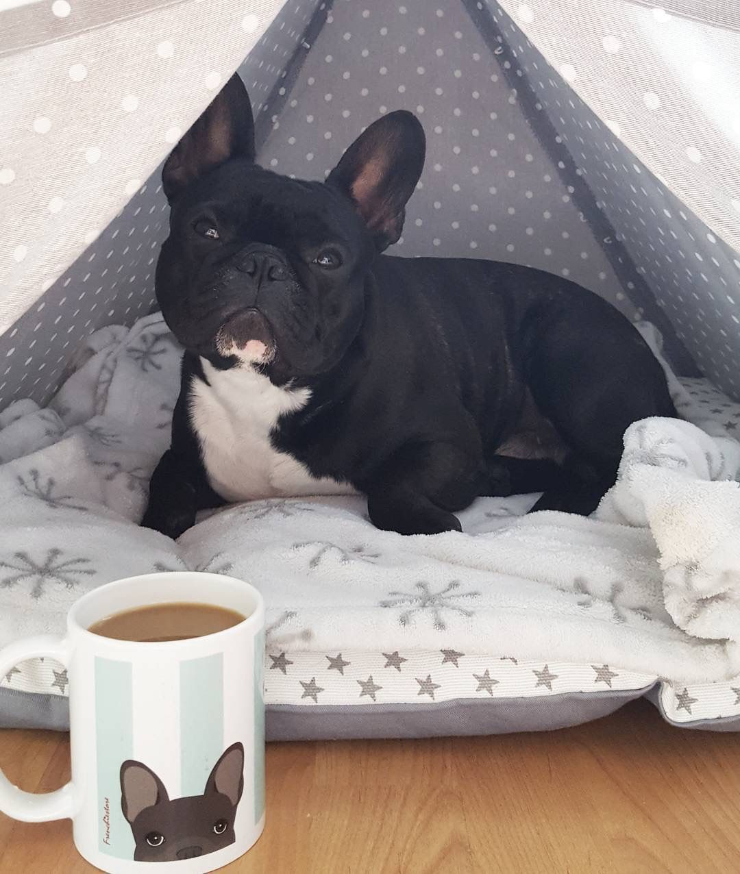 Pin By Bb Glazer On Customers Products Brindle French Bulldog Bulldog Cute French Bulldog