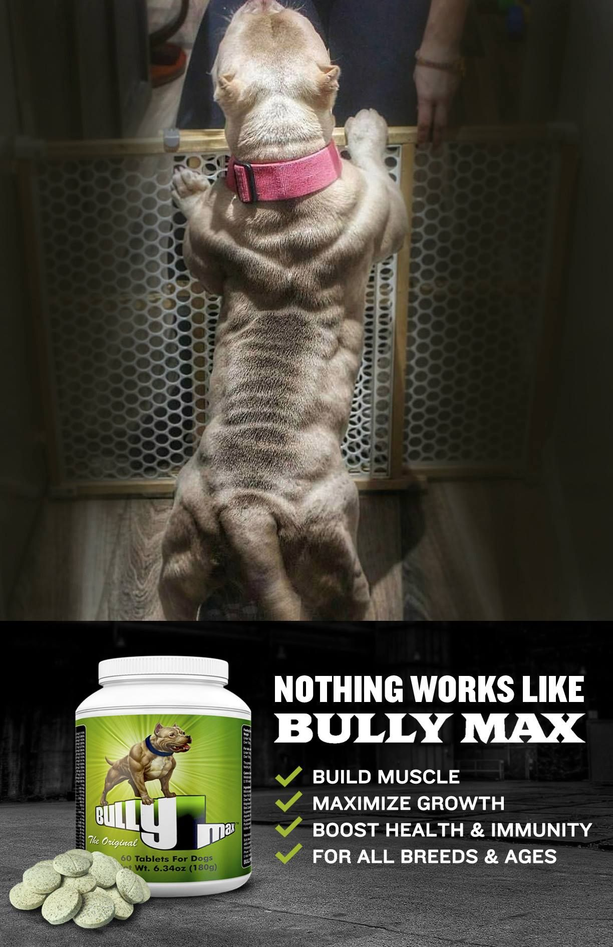 Products Bully Max Bully Dog Bullying