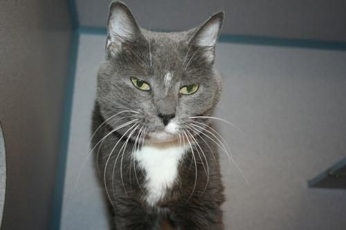 Pretty girl GRACE (sweetheart) was found in NEW BRIGHTON...NOW ADOPTABLE!!! BCHS ALIQUIPPA, PA.