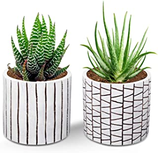 Amazon Com Flower Pots For Succulent Plants Planting Succulents Flower Pots Succulents
