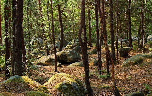 La Foret De Fontainebleau Foret De Fontainebleau Fontainebleau
