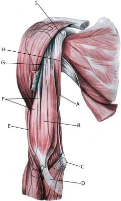 What Are The Symptoms Of A Rotator Cuff Injury