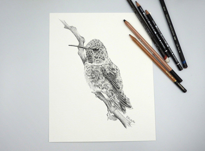 Original Hummingbird Pencil Drawing Bird Wall Art Tropical