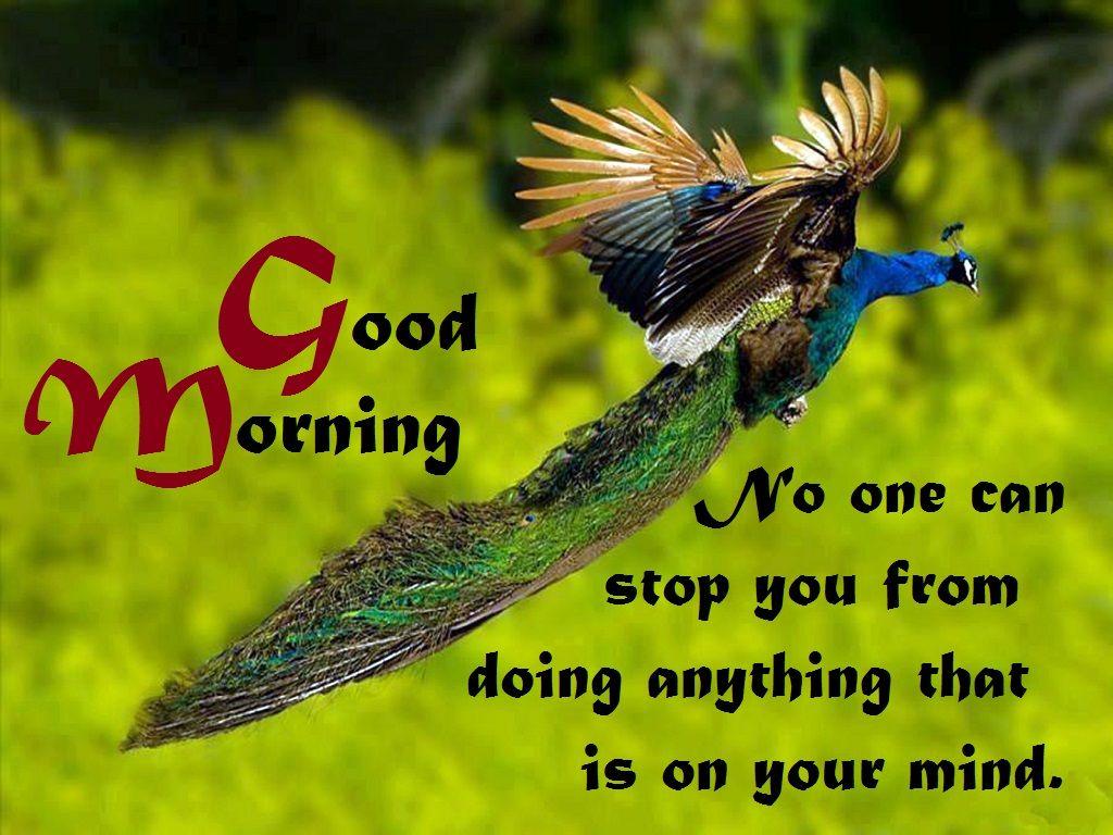 new latest good morning hd photo images gallery aajkalfun good