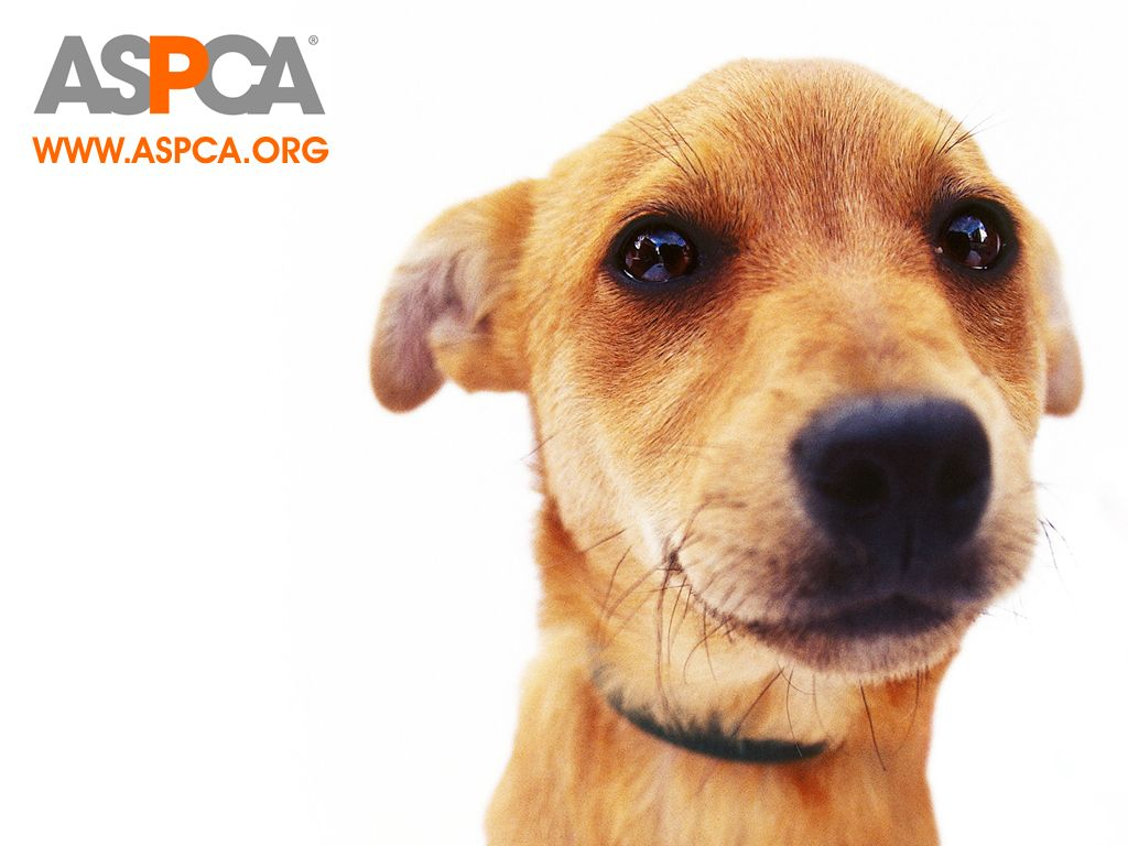 ASPCA Dog Wallpaper - Against Animal Cruelty! Wallpaper (4484862) - Fanpop