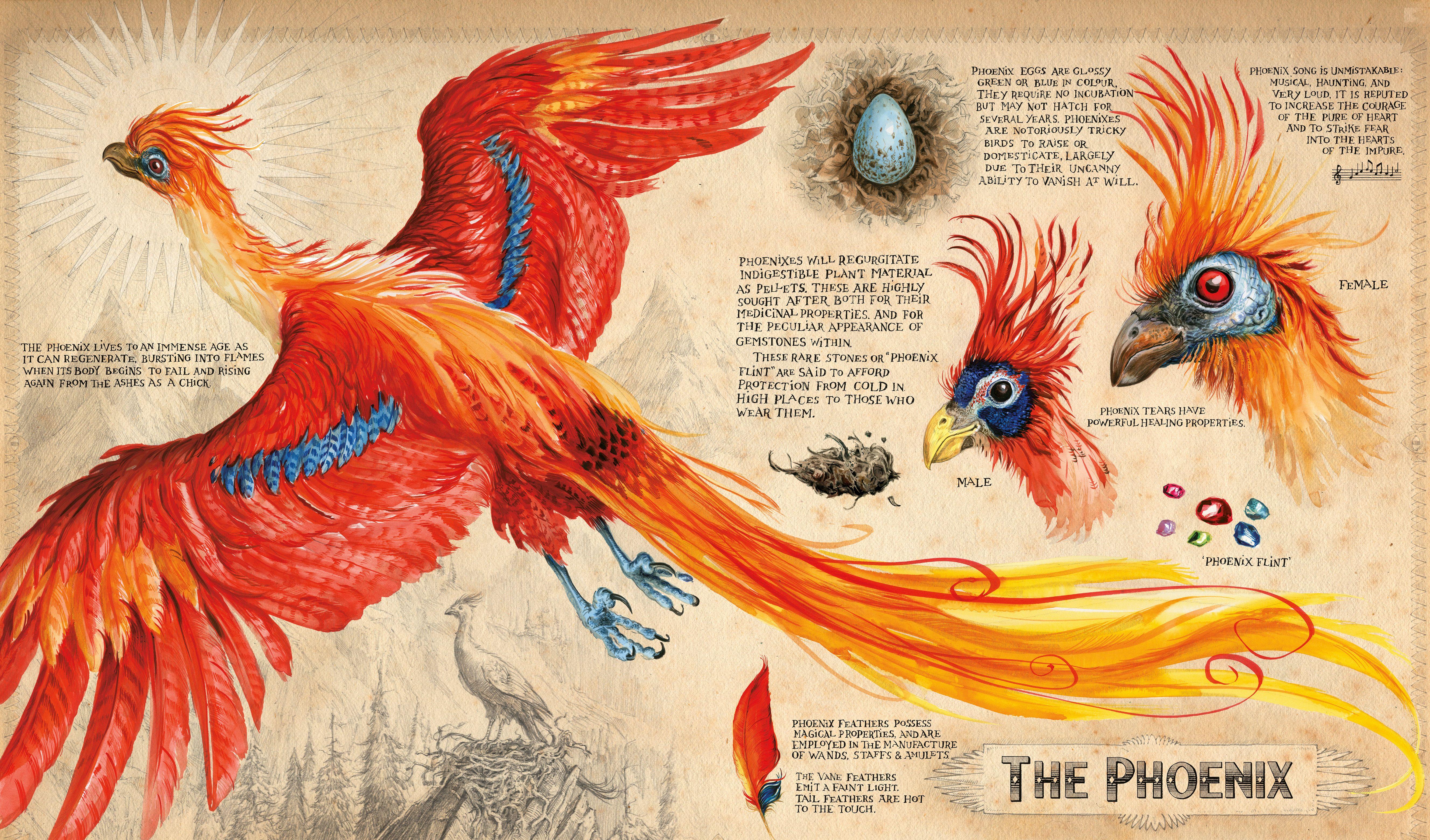 Phoenix Artwork From Harry Potter And The Chamber Of Secrets Jim Kay Jpg 5311 3120 Phantastische Tierwesen Harry Potter Thema Harry Potter Bucher