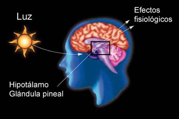 DESCALCIFICA TU GLÁNDULA PINEAL | Salud glándula pineal | Pinterest ...