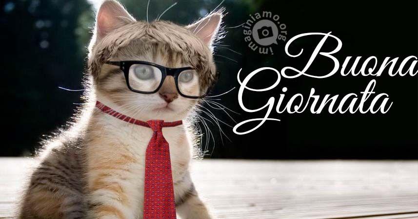 Buongiorno divertenti con gatti buongiorno cats e animals for Immagini divertenti buongiorno venerdi