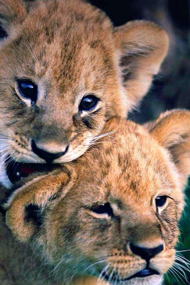 Süße Bilder Tiere
