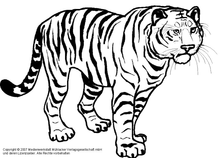 Malvorlagen Von Tiger Ausmalbilder Tiger Kostenlos Malvorlagen Zum Ausdrucken Vorlagen