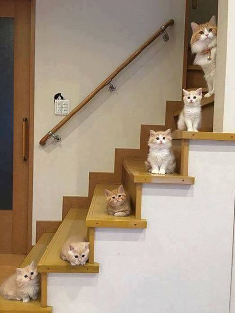 So Adorable Cute Cats On Stairs Cats Kittens Kittens Cutest