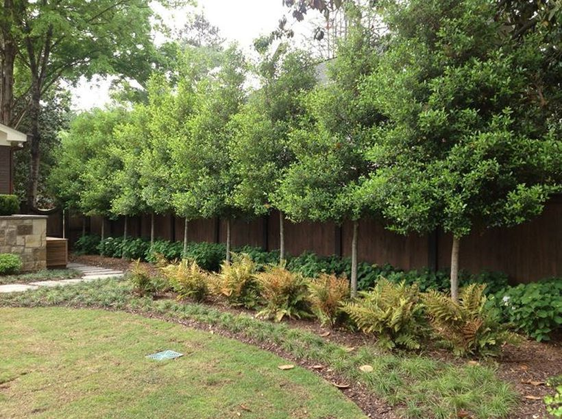 115 Amazing Ideas to Make Fence with Evergreen Plants ...