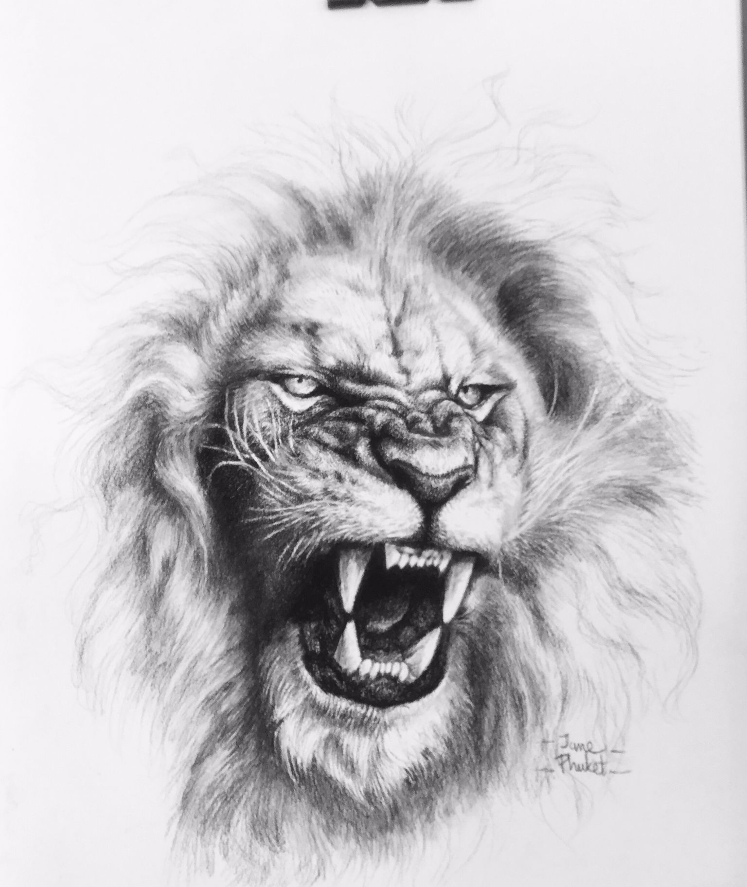 Roaring Lion Outline Drawing / When you're happy with the shape of your mane, darken the quick, short strokes.