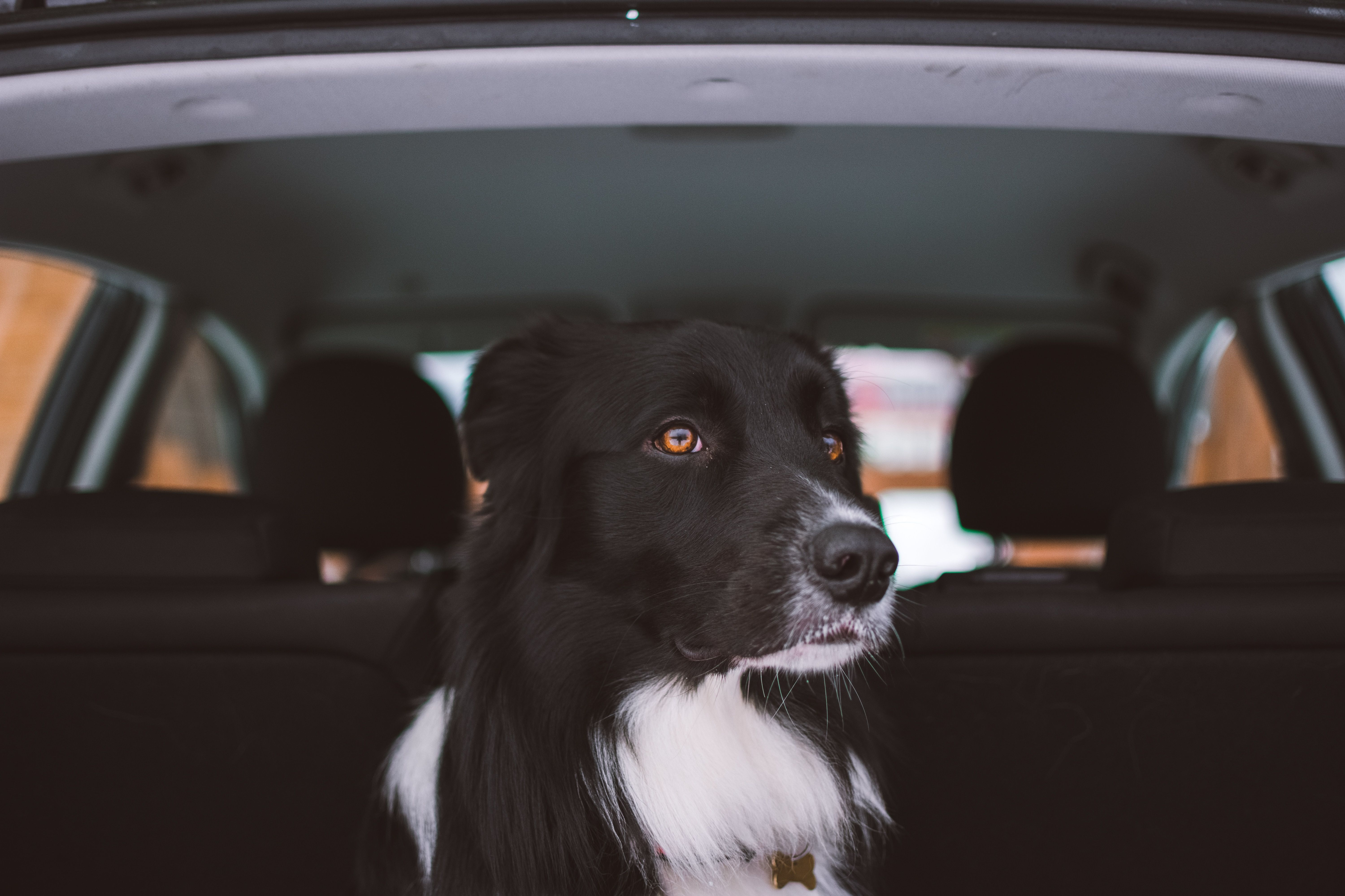 Who Loves Taking Their Best Friend On A Drive To The Store Like We
