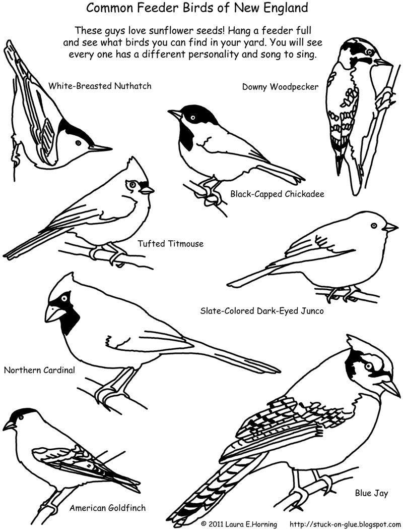 Birds Of New England Bird List Bird Identifier Bird Watching Because This Is Ava S New Obsession Bird Coloring Pages Coloring Pages Coloring Pages Winter