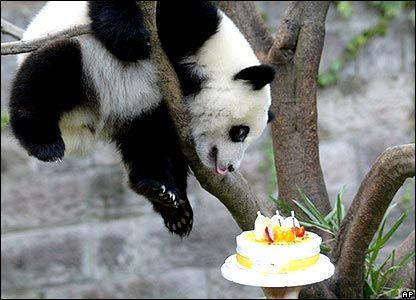 b17cd0554537ceb0e816537bfcae09eb happy birthday, panda! pandas pinterest panda and animal