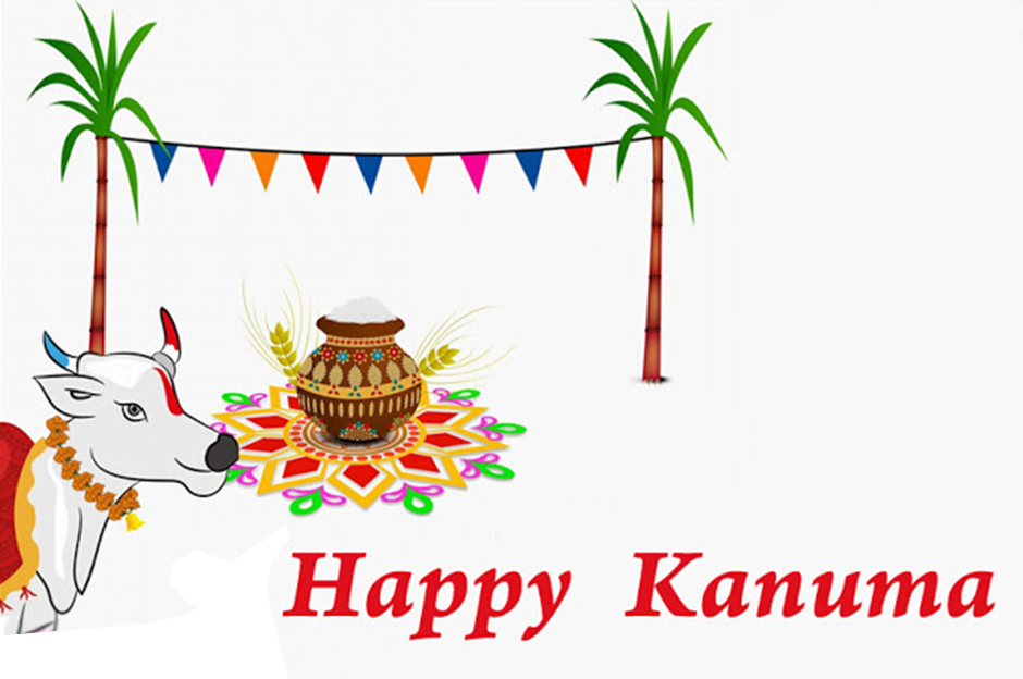 The history of kanuma festival in hindu sankranthi tradition