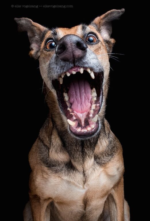 German photographer Elke Vogelsang uses her camera to show the expressive, and often silly, side of dogs.
