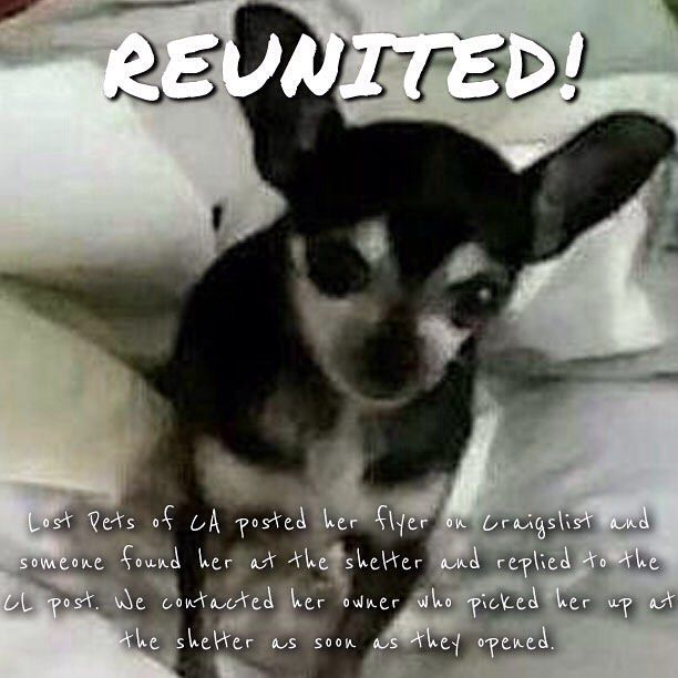 Lost Pets Of California On Instagram Backhome Luna Chihuahua From Sacramento Ca Has Been Reunited With Her Family Lost 11 Losing A Pet Pets Chihuahua